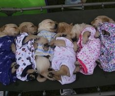 What is not to like when you put adorable puppies in pajamas Puppies In Pajamas, Puppies And Kitties, Cute Puppies, Cute Dogs, Kittens, Doggies, Maltese Puppies, Chihuahua, I Love Dogs