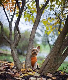 Puppy Pictures, Autumn Theme, Peek A Boos, Cute Photos, Have Fun, Fox, Puppies, Pets, Cottage