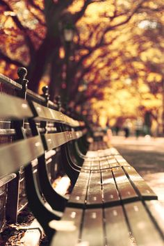 ...sitting on a park bench watching life pass by.