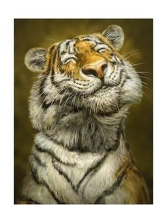 Patrick Lamontagne Smiling Tiger Canvas Art – 20 x 25 - Cutest Baby Animals Laughing Animals, Smiling Animals, Happy Animals, Cute Baby Animals, Animals And Pets, Funny Animals, Wild Animals, Cute Dogs And Puppies, Pet Dogs