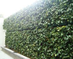 Muro Minigarden Vertical