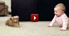 Shhh! Hear That? This Puppy and Baby Have Their Own Language. :)