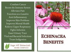 One of the most known herbs, and every family needs Echinacea from time to time. Roots are dried with an earthy smell.