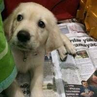 ücretsiz köpek ilanları lütfen sokaktan bir can kurtarın