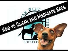 How to Clean and Medicate your Pet's Ears - YouTube