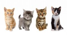 Uber to Deliver Adoptable Kittens Across the US on October 29 in Honor of National Cat Day