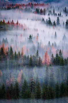 banshy: Mist in the Trees // Jay Tayag - Board: Moody Photos 1 ....... moody moves makes me you feel evokes emotional feelings evocative images