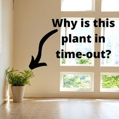 "Staging DONT'S! ""Light staging"" is worse than no staging at all! It just leaves us with more questions than answers…like ""Why is this plant in time-out? What did it do?"""