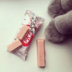 Strawberry Pink Kit Kat / Paws KitKat