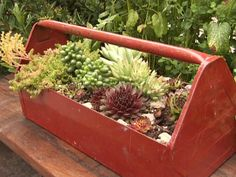 An old metal tool tote makes a perfect home for a succulent garden. The best part is it can be moved wherever a little pop of greenery is needed. Make sure to drill a few drainage holes in the bottom.