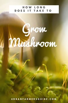 Just how much time should it take you to harvest mushrooms from your mushroom growing. Well, if you like large mushrooms, these can take up to three months to m Large Mushroom, Stuffed Mushrooms, Gardening, Stuff Mushrooms, Lawn And Garden, Horticulture