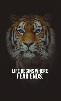 Top famous motivational words, Every day you will find motivational words. Our aim is to raise your self-esteem and self-motivation with our quotes. Tiger Quotes, Lion Quotes, Fear Quotes, Boss Quotes, Reality Quotes, Animal Quotes, Attitude Quotes, Wisdom Quotes, Success Quotes