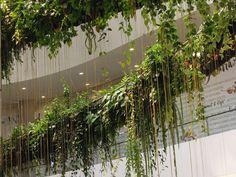 The Rainforest Chandelier, pink long hanging roots of Cissus sicyoides, EmQuartier, Bangkok