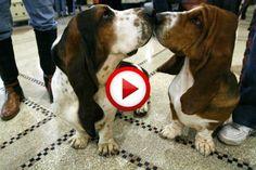 I wanna be your dog #animals, #dogs, #funny, #music, #videos, #pinsland, https://apps.facebook.com/yangutu