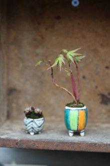 super mini bonsai