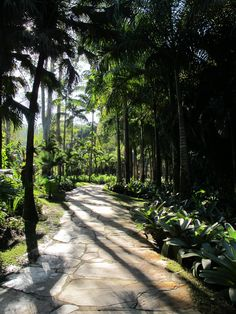 Art and Botanical Garden Park at Inhotim, Brazil   | This Is My Happiness.com #Brazil #travel