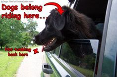Travel Safety GIVEAWAY: Because Dogs Falling Out of Car Windows Isn't Very Fun  Be a responsible pet parent, be sure your dogs are secured in the car.