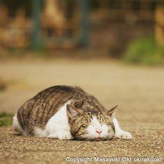 すやすやと眠っていますね。(=^ェ^=)