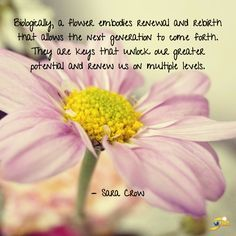 """""""Biologically, a flower embodies renewal and rebirth that allows the next generation to come forth. They are keys that unlock our greater potential and renew us on multiple levels."""" - Sara Crow  http://theshiftnetwork.com/?utm_source=pinterest&utm_medium=social&utm_campaign=quote"""