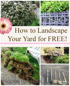 House Revivals: How to Landscape Your Yard for Free