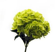 If/When I get married, these will be in my boquet or on the reception tables.
