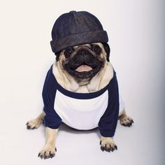 """""""When your whole outfit's on point"""" - LOULOU ✌ PUG WEARING A BETON CIRE HAT / MIKI BRETON"""