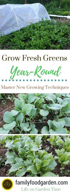 Growing greens - Master new gardening techniques