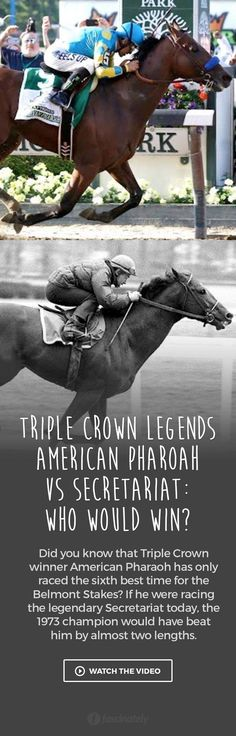 90 Best A Pharoah After Crowning Images In 2017 Horse