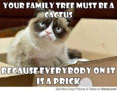 Grumpy cat funny, grumpy cat humor, grumpy cat meme, sarcastic funny, grouchy cat … For more hilarious memes and funny stuff visit www. Grumpy Cat Quotes, Funny Grumpy Cat Memes, Funny Animal Memes, Funny Cats, Funny Animals, Funny Memes, Grumpy Kitty, Kitty Kitty, Funny Quotes