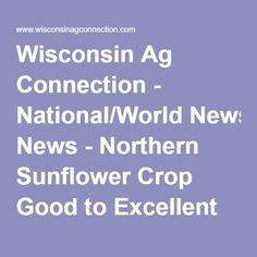 Wisconsin Ag Connection - National/World News - Northern Sunflower Crop Good to Excellent