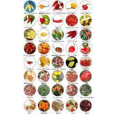 Kit 40 Diferentes Sementes De Pimentas Especiais Raras
