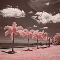 Palm Trees in Cairns, Australia, by Paula Cobleigh