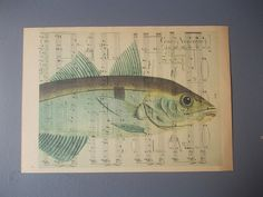 Fish Print / Print on Vintage Book Page / Home Decor by EUvintage, $8.00