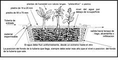 Juncos para potabilizar el agua en plantas depuradoras