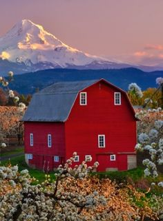 Barn with a view!