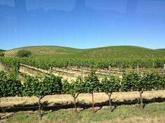 Wine tour through Napa and Sonoma #travel