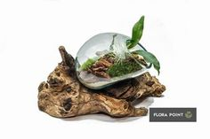 Terraria, Flora, Diy, Terrariums, Bricolage, Plants, Do It Yourself, Homemade, Diys