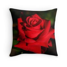 Single Red Rose photograph throw pillow by Tracey Lee Art Designs
