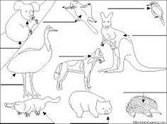 More Unique Australia Animals Httpaustralian Animalsnet Sketch Coloring Page