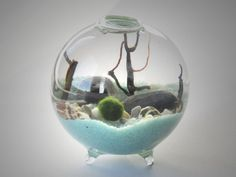 Marimo Terrarium by Midnight Blossom - Miniature footed aquarium with living Japanese moss ball, sand, pebbles, sea shells and black sea fan : MIDNIGHTinSEATTLE - etsy