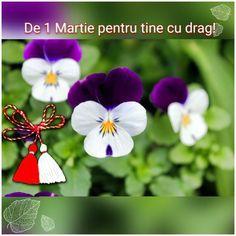 1Martie 8 Martie, Birthday, Plants, Mario, Flowers, Birthdays, Plant, Dirt Bike Birthday, Planets
