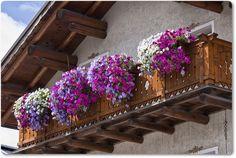 Kako da uredite balkon ako nemate mnogo vremena za biljke - Moj Vrt Cvijeća