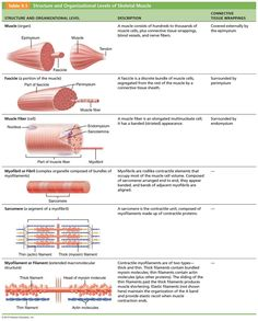 Chapter 9: Muscles and Muscles Tissue