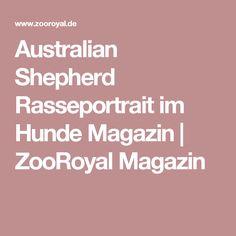 Australian Shepherd Rasseportrait im Hunde Magazin   ZooRoyal Magazin