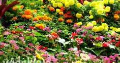 A Flower Garden Display at the Bangalore Lalbagh Flower Show   Fottams!