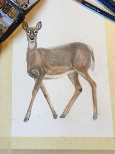 Deer, watercolor art Reference photo by Henrik Pullinen Deer Illustration, Art Reference, Watercolor Art, Moose Art, Animals, Instagram, Animales, Watercolor Painting, Animaux