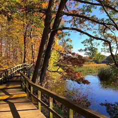 Less than 30 minutes from Toronto is a hidden paradise that serves as the perfect spot to escape the city for a couple hours. Nestled along the Mis. Lush, Toronto, Paradise, Hiking, City, Couple, Walks, Couples, Trekking
