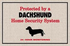 Protected by Dachshunds