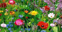 I love wild flowers