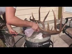 HOW TO CLEAN A DEER SKULL ( EASY PROFFESIONAL EUROPEAN METHOD ) - YouTube